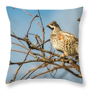 Hazel Grouse Tetrastes Bonasia Throw Pillow by Gabor Pozsgai