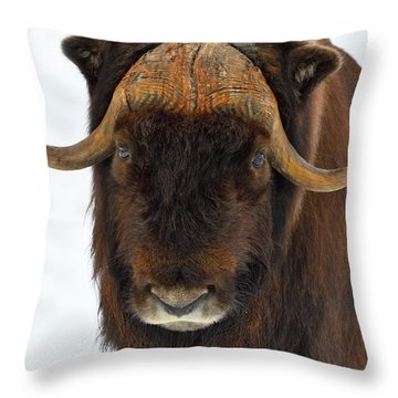 Head Butt Throw Pillow
