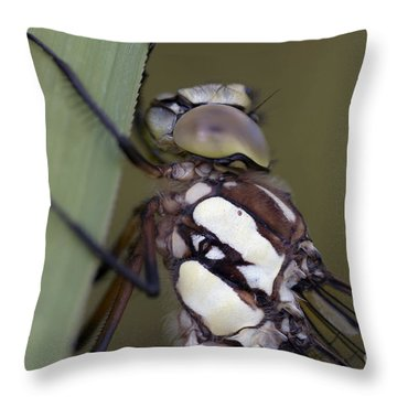 Head Of The Dragon-fly Throw Pillow by Michal Boubin