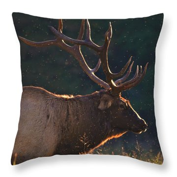 Head Of The Herd Throw Pillow