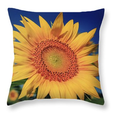 Throw Pillow featuring the photograph Heading For Gold by Chris Berry