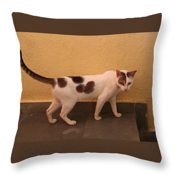 Heart Cat At Rosie's In Ganeshpuri Throw Pillow by Jennifer Mazzucco