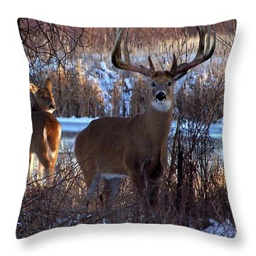 Heartbeat Of The Wild Throw Pillow by Bill Stephens
