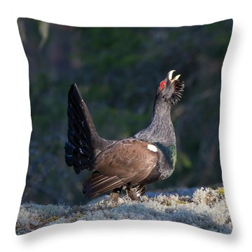 Heather Cock In The Morning Sun Throw Pillow