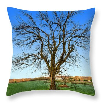 Hedge Apple Tree Throw Pillow