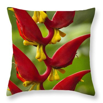Heliconia Dielsiana Throw Pillow by Heiko Koehrer-Wagner