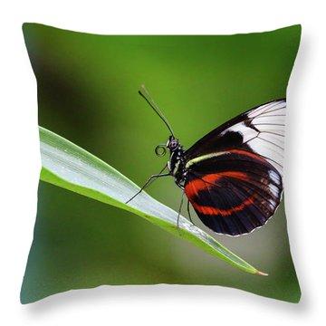 Heliconius Throw Pillow