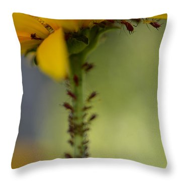 Heliopsis Infested Throw Pillow