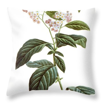 Heliotrope Throw Pillow by Granger