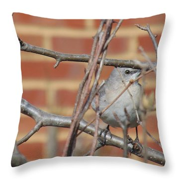 Hello Birdie Throw Pillow by Charlotte Gray