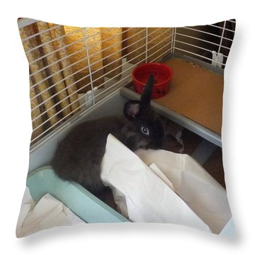 Throw Pillow featuring the photograph Hello, I Was Just Redecorating by Denise Fulmer