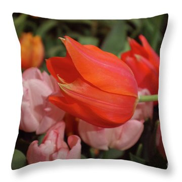 Hello Throw Pillow by Sandy Moulder