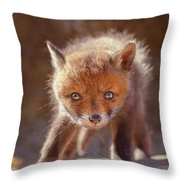 Cuteness Overload Series - Red Fox Baby Throw Pillow