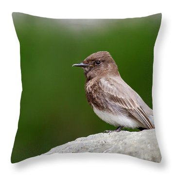 Black Phoebe Throw Pillow