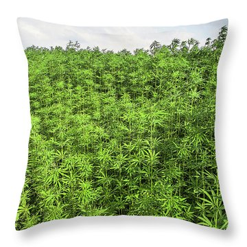 Hemp Plantation Throw Pillow