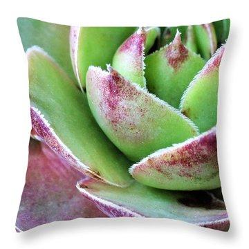 Hen Up Close Throw Pillow