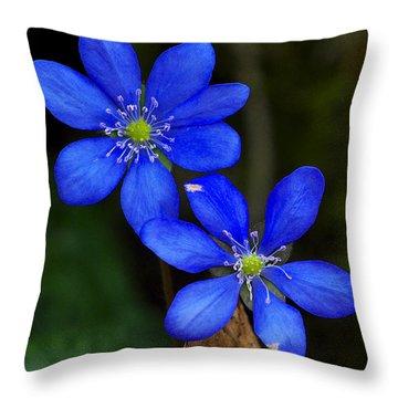 Hepatica Nobilis Throw Pillow
