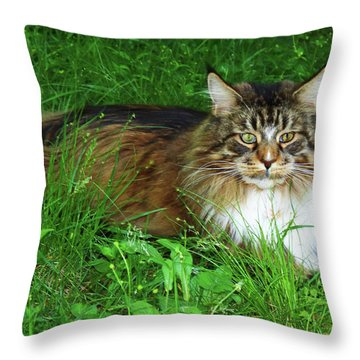 Throw Pillow featuring the photograph Hercules Maine Coon Elegance by Roger Bester