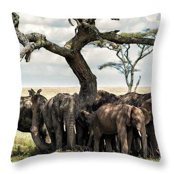 Herd Of Elephants Under A Tree In Serengeti Throw Pillow