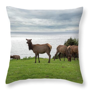 Herd Of Elk At Ecola State Park Throw Pillow