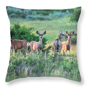 Herd Of Muleys Throw Pillow