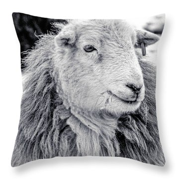 Herdwick Sheep Throw Pillow