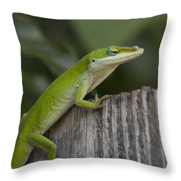 Here Lizard Lizard Lizard Throw Pillow by D Wallace