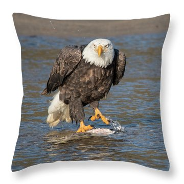 Here's Staring At You Throw Pillow