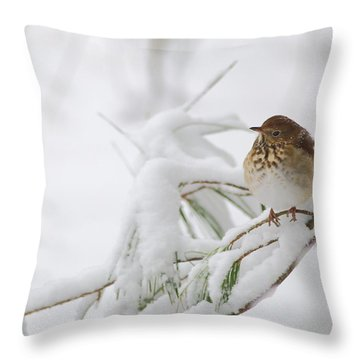 Hermit Thrush In Snow Throw Pillow