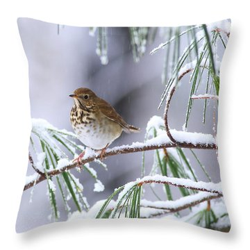 Hermit Thrush In Snowy Pine Throw Pillow
