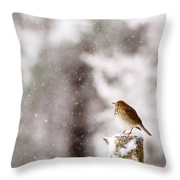 Hermit Thrush On Post In Snow Throw Pillow