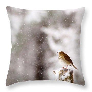 Hermit Thrush On Post In Snow Throw Pillow