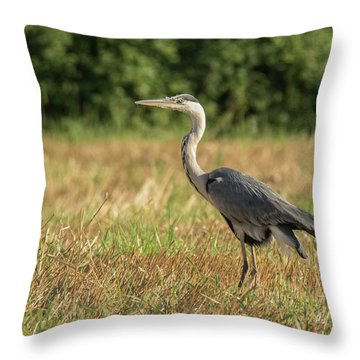 Heron In The Field Throw Pillow