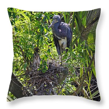 Heron With Chick In Nest Throw Pillow by Kenneth Albin