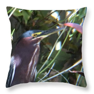 Heron With Yellow Eyes Throw Pillow by Val Oconnor