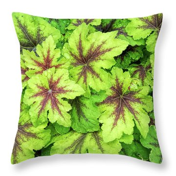 Throw Pillow featuring the photograph Heucherella Art Nouveau Leaves by Tim Gainey