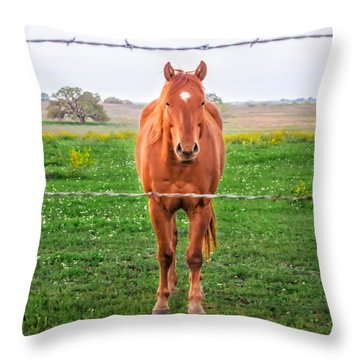 Throw Pillow featuring the photograph Hey You - Ya You by Melinda Ledsome