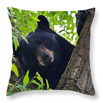 Hi There Throw Pillow by Matt Helm