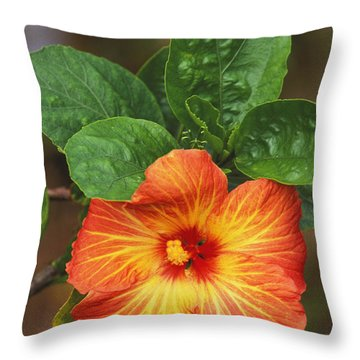 Hibiscus Throw Pillow by Allan Seiden - Printscapes