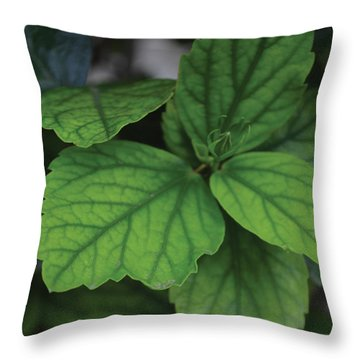 Hibiscus Bud 1 Throw Pillow