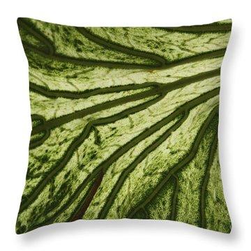 Hibiscus Tiliaceus Variegata 3 Throw Pillow