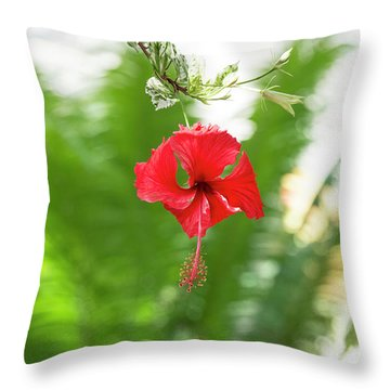 Throw Pillow featuring the photograph Hibiscus by Tim Gainey