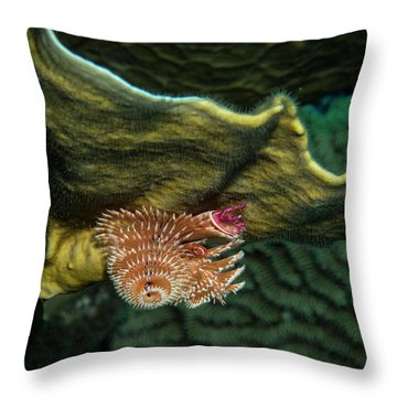 Throw Pillow featuring the photograph Hidden Christmastree Worm by Jean Noren
