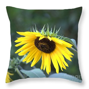 Hidden Depression Throw Pillow