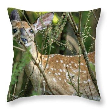 Hiding Fawn Throw Pillow