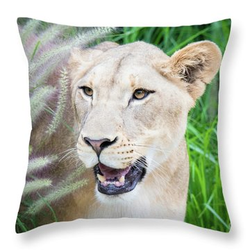 Hiding In Grass Throw Pillow