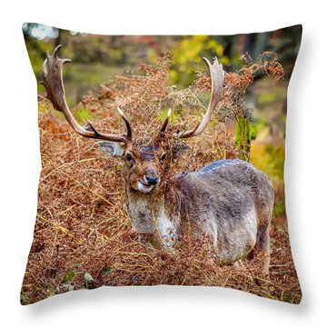 Hiding In The Bracken Throw Pillow
