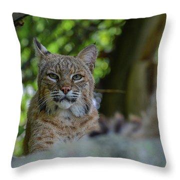 Hiding In The Rocks Throw Pillow