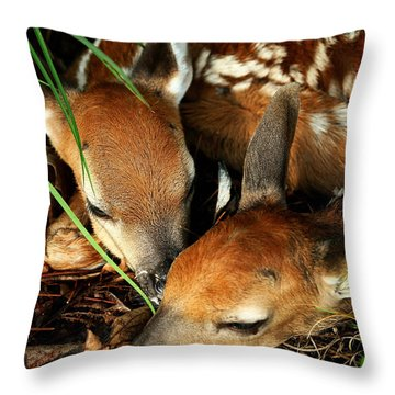 Hiding Twin Whitetail Fawns Throw Pillow