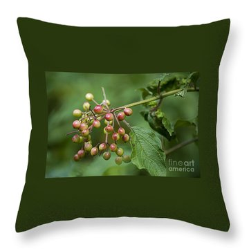 High Bush Cranberry 20120703_106a Throw Pillow by Tina Hopkins